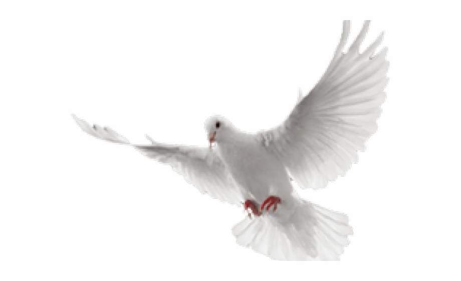Dove Png Transparent Background 2020