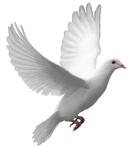 Dove Png Transparent Background
