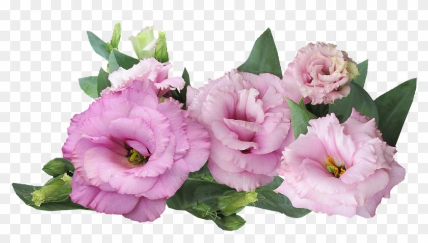 Prairie Rose Png