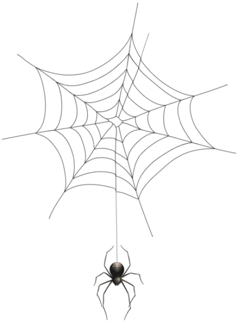Spider Web Logo No Background