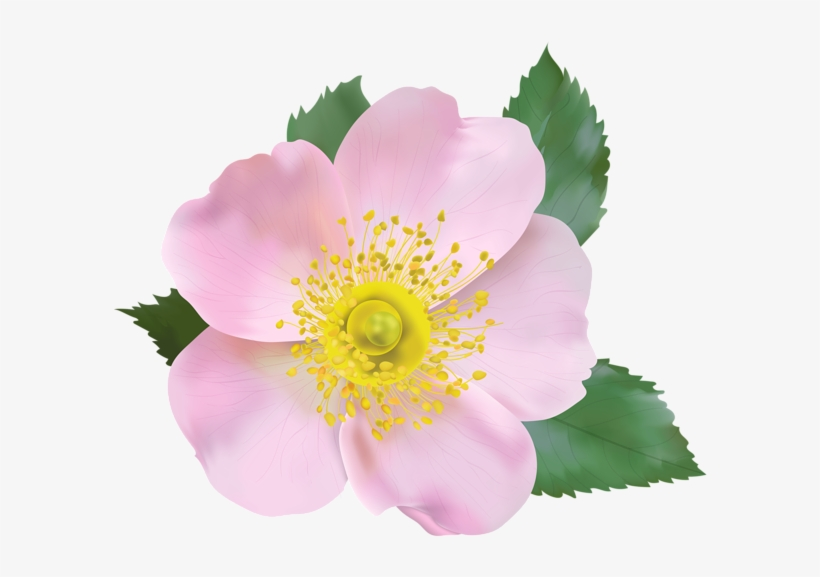 Wild Rose Png